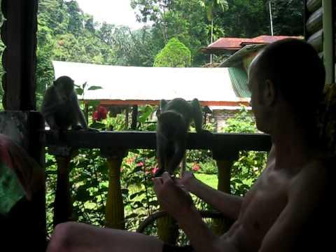 Monkey Funky