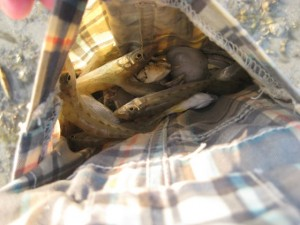 Tasche voller Fische