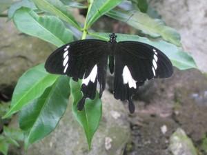 Butterfly-Bukit-Lawang