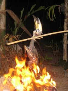 Hornbill-Koh_Phayam-6