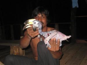 Hornbill-Koh_Phayam-3