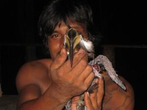 Hornbill-Koh_Phayam-4