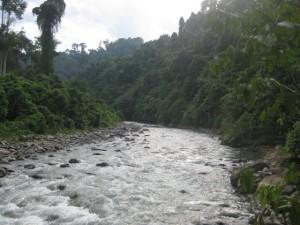 Regenwaldriver-Bukit-Lawang