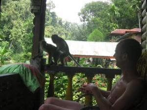 monkeyfuck-Bukit-Lawang
