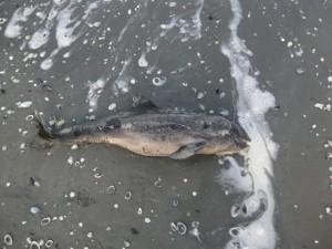 beach mamaia dolphin