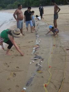 Fischbeute Koh Phayam